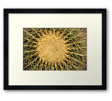 Spines on a Cactus Framed Print