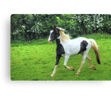 Cantering Piebald Canvas Print