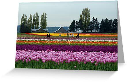 Dutch Tulips in America by Marjorie Wallace