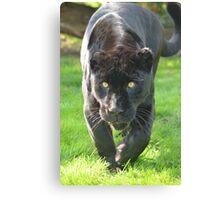 Black Jaguar (1) Canvas Print