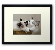Is this our best side? Framed Print