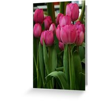 Vibrant pink Tulips Greeting Card