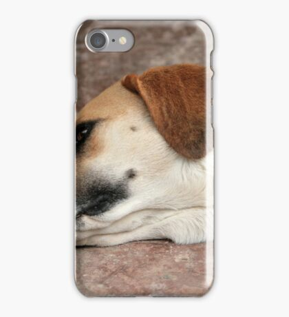 Dog on Concrete iPhone Case/Skin
