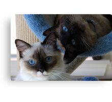 Bella and Murphy Canvas Print