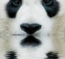 Water panda Sticker