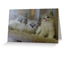 The Three Mouseketeers Greeting Card