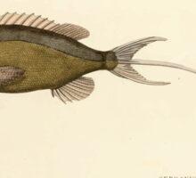 Natural History Fish Histoire naturelle des poissons Georges V1 V2 Cuvier 1849 221 Sticker