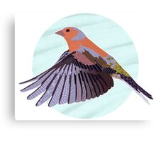 A Beautiful British Chaffinch  Canvas Print