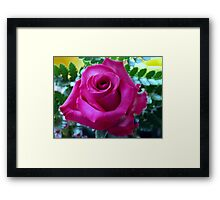 Roses From My Hubby Framed Print