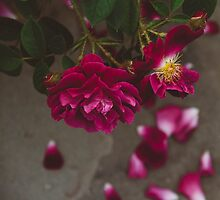 Falling Petals by Bethany Helzer
