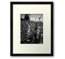 Dark Meadow Framed Print