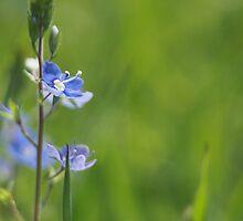 Flower Blue on Green by Robert Worth