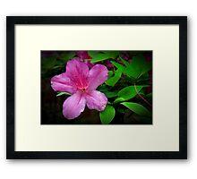 Azalea Flower Framed Print