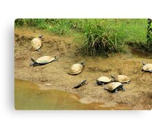 Turtles on a Beach Canvas Print