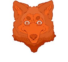 All Orange Wolf Photographic Print