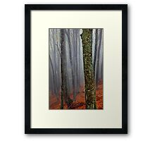 Lost in the misty forest Framed Print