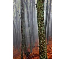 Lost in the misty forest Photographic Print