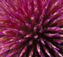 Fabulous cardoon flower closeup Sticker
