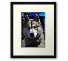 Husky Dog Profile Framed Print