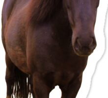 Icelandic horse on serenity blue background Sticker