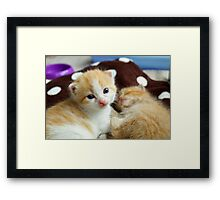 Ginger kittens Framed Print