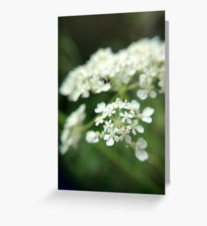 fragile flowers - white Greeting Card