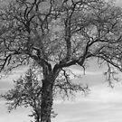 The tree in winter by Jeff  Wilson