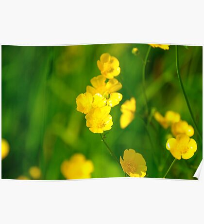 Buttercup Images Poster