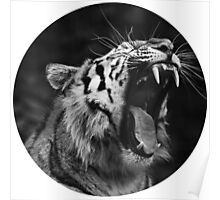 Tiger black and white cut Poster