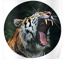 Tiger cut Poster