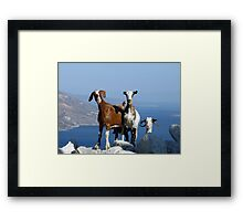 Happy Goats Framed Print