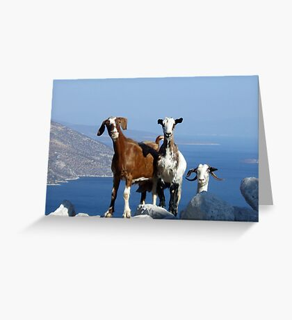 Happy Goats Greeting Card