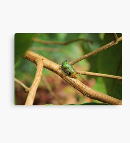 Green Insect on a Tree Branch Canvas Print