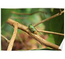 Green Insect on a Tree Branch Poster