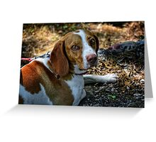 Bright Eyes - Beagle Portrait Greeting Card