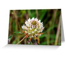 The Mystery Clover.... Greeting Card