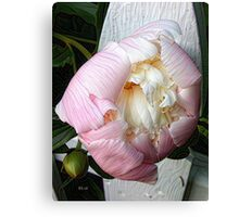Peony on Fence Canvas Print
