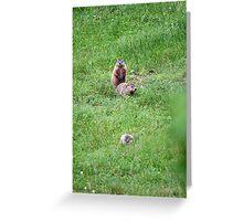 Three little pigs Greeting Card