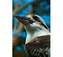 Where the Kookaburras Call  Photographic Print
