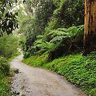 Rainforest Path by Lloyd Mouat
