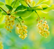 barberry, blooming shrub - soft focus Sticker