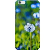 Beautiful white dandelion with seeds on blue green background iPhone Case/Skin