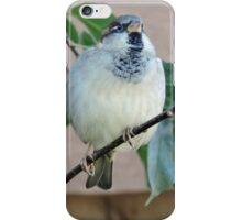 Darling of Flight iPhone Case/Skin