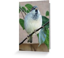 Darling of Flight Greeting Card