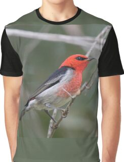 Scarlet Graphic T-Shirt