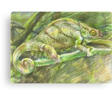 chameleon. color pencil Canvas Print