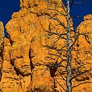 USA. Utah. Red Canyon. Dead Tree. by vadim19