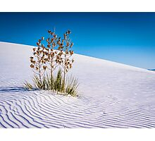 White Sands National Monument Photographic Print