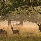 Red Deer at Woburn by JMChown