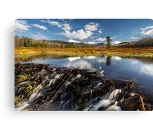 Beaver dam in the Uinta's Canvas Print
